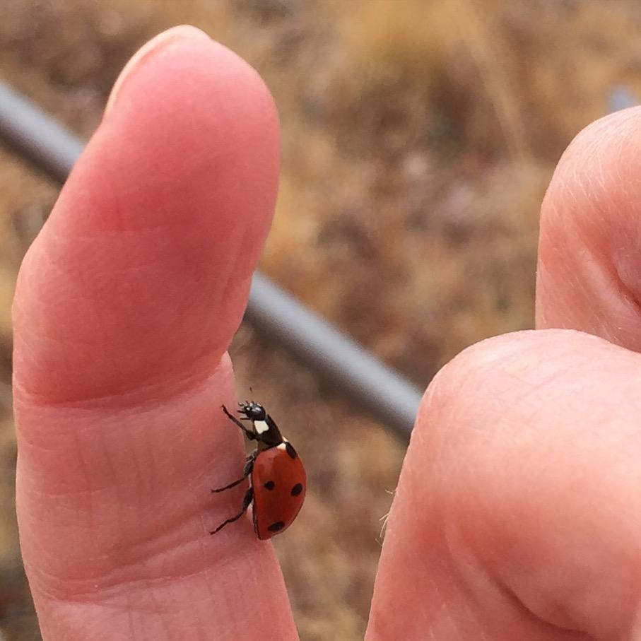 Ladybug ladybug, fly away home . . . and take me with you!